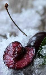 close up of frozen leaf